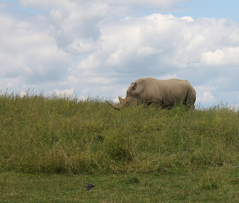 rhino at wilds cumberland ohio