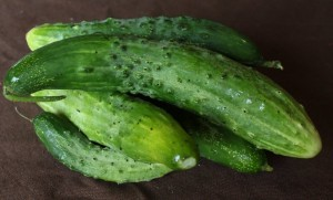 too-big pickling cucumbers