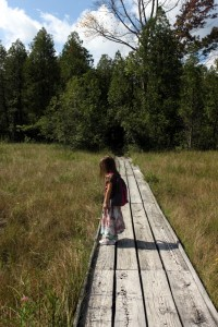 child standing on boardwalk at cedar bog