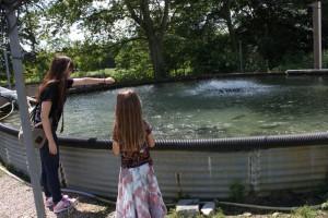 feeding trout freshwater farms ohio