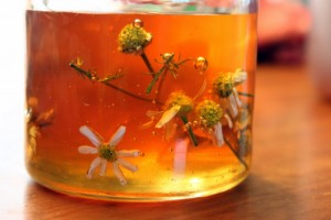 chamomile flowers soaking in honey natural cough syrup