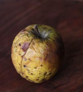 wrinkled old apple