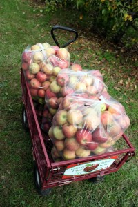 apple cart with three bushels