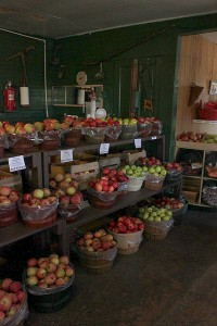 apple variety at lawrence orchards