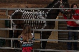open house osu equine skeleton horse