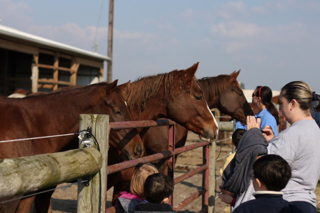 petting horses osu equine