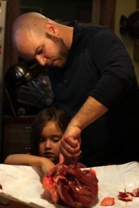 examining a beef heart