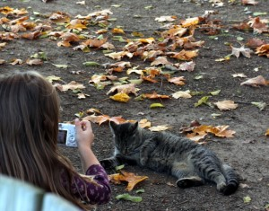 child photographing cat