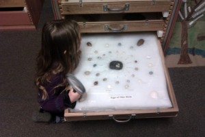 child looking at bird eggs at cincy museum center
