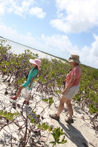 walking in mangrove swamps san sal