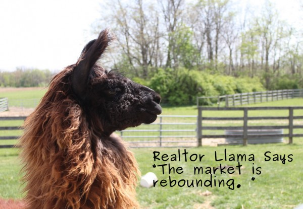 realtor llama