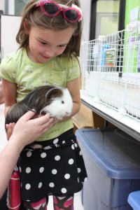 guinea pig at CAHS