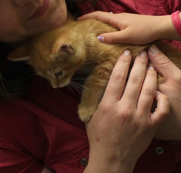orange kitten cahs