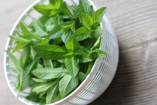 fresh mint in salad spinner bowl
