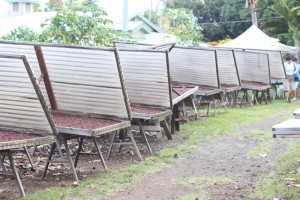 cacao drying racks