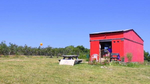 red shack at berryfield farms