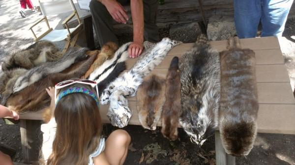 petting pelts