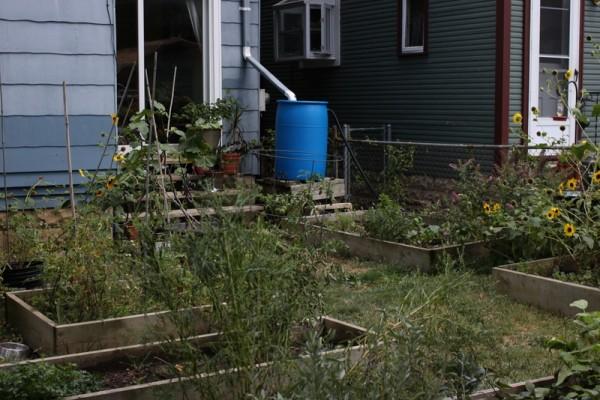 dry garden august 2012