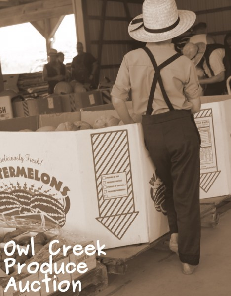owl creek produce auction