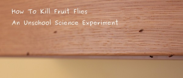 how to kill kitchen fruit flies