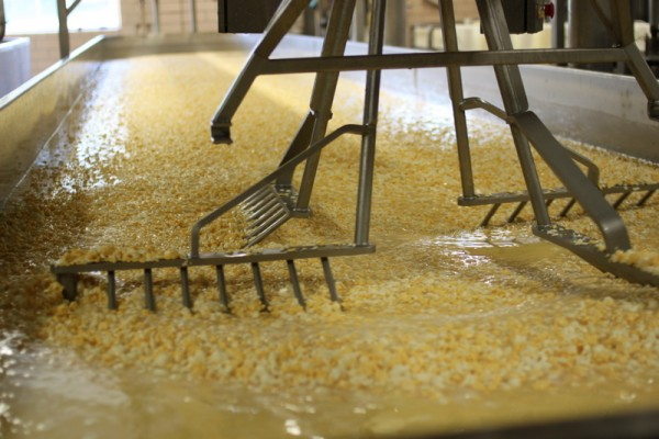 pearl valley cheese curds in stirring machine