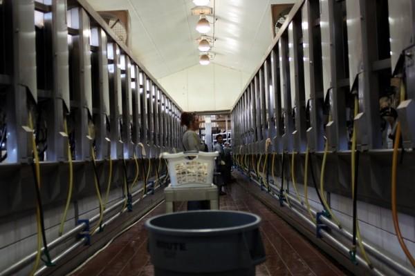 andreas milking parlor