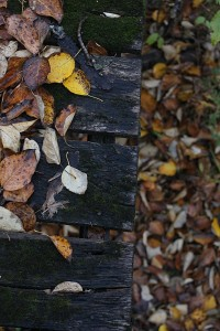 wooden bridge and leaves