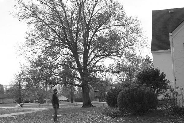 homestead big tree