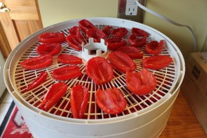 dehydrating tomatoes after 5 hours