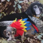 parrot dog costume
