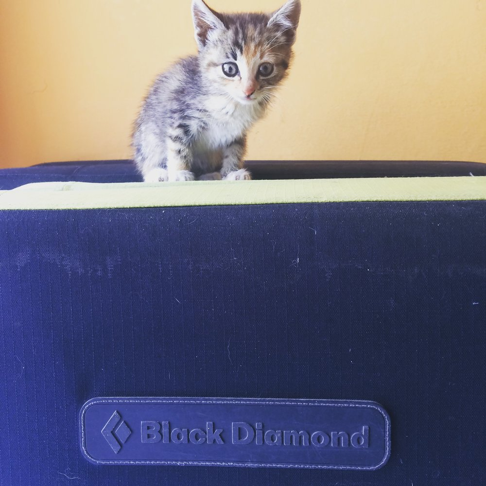 Upon our second visit, we were delighted to find Luciana had just acquired a new kitten, only six weeks old and already a climbing pro.  Shout out to Black Diamond if you're looking for a new mascot.