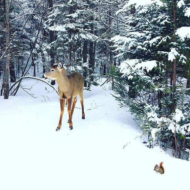 Hier nous avons eu une bien belle surprise durant notre promenade en pleine nature #bambi