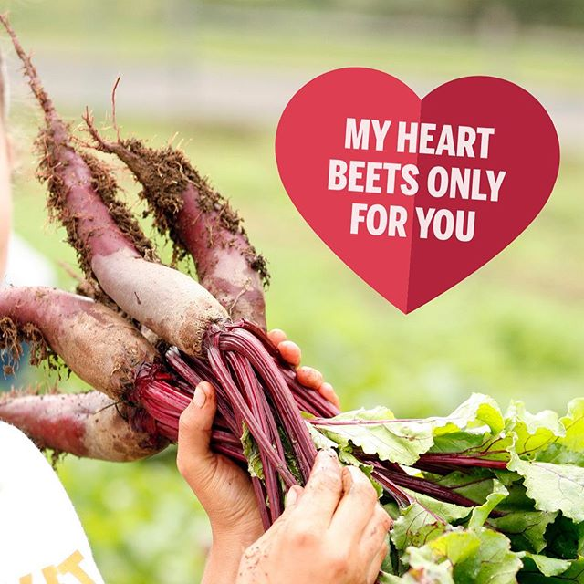 Send your love a Valentine from the farm! Head to our Story for some favorites. #myheartbeetsonlyforyou #farmlove #valentines #lettucebetogether