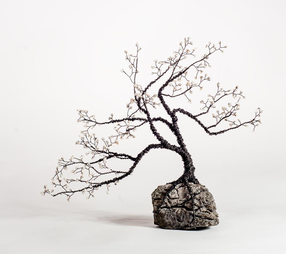 bonsai on rock   photo Reg Gordon, Galway Ireland