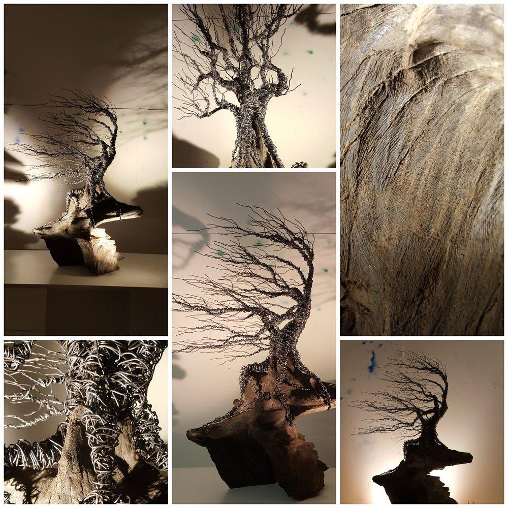 twisted windswept on bog wood.jpg