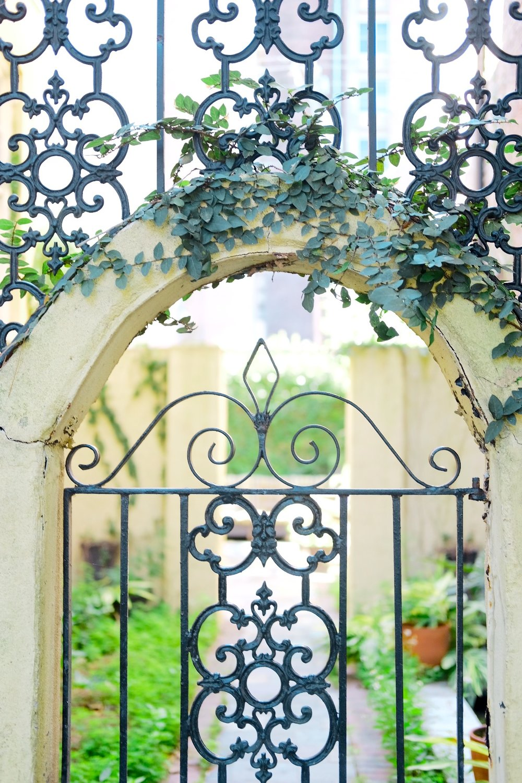 Savannah Magnolias | Genteel & Bard Fine Savannah Walking Tours