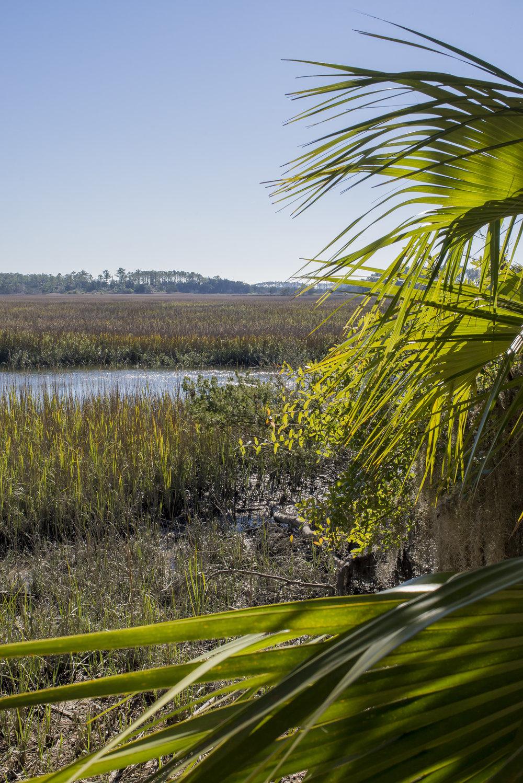 Marsh views outside Savannah, GA
