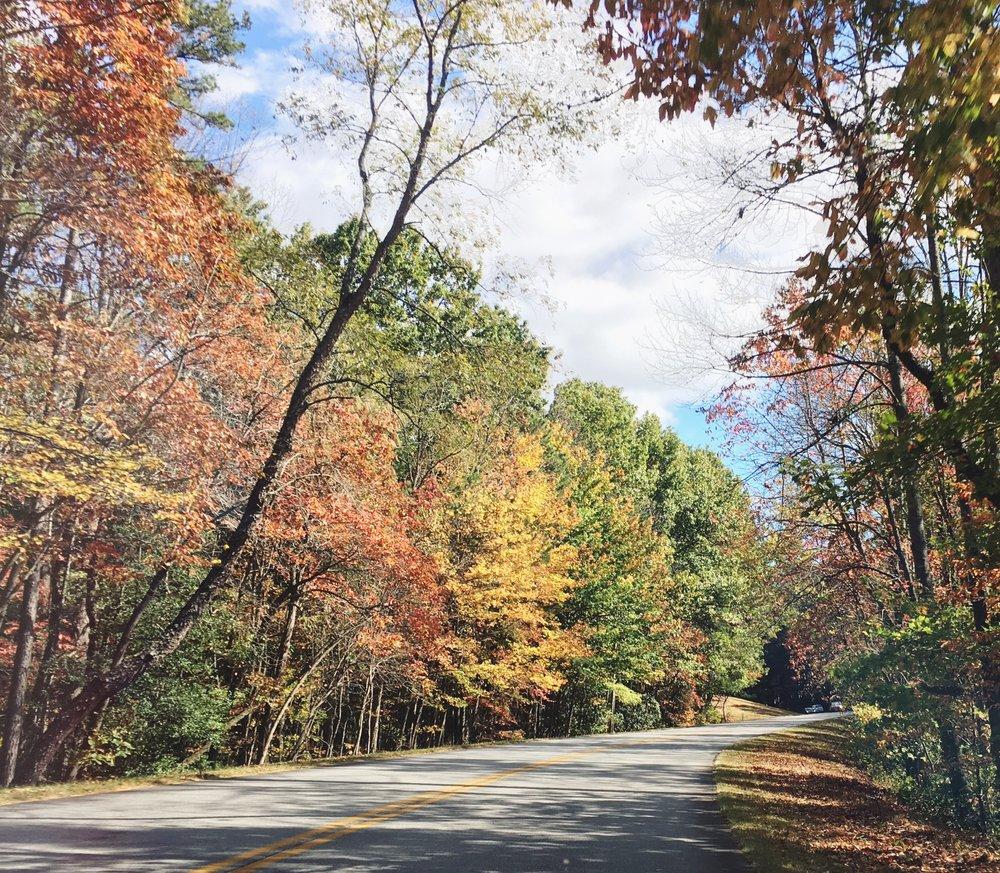 Fall color along the Blue Ridge Parkway, outside Asheville, NC