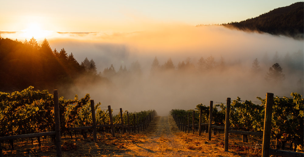 rudd_vineyards_mtveeder-01.jpg