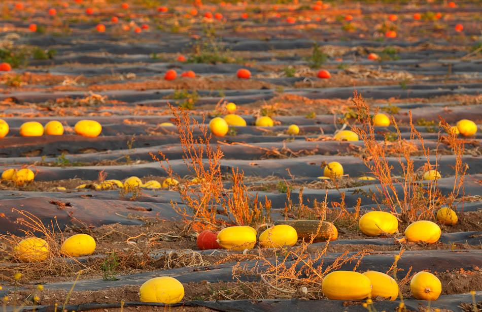 Squash-Pumpkins-Master__950px.jpg