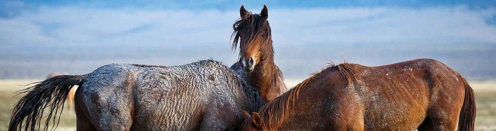EQUUS   2019 Equine Based Photography Workshops  Learn More