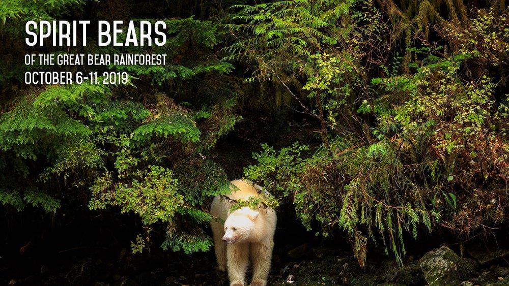 Great Bear Rainforest -