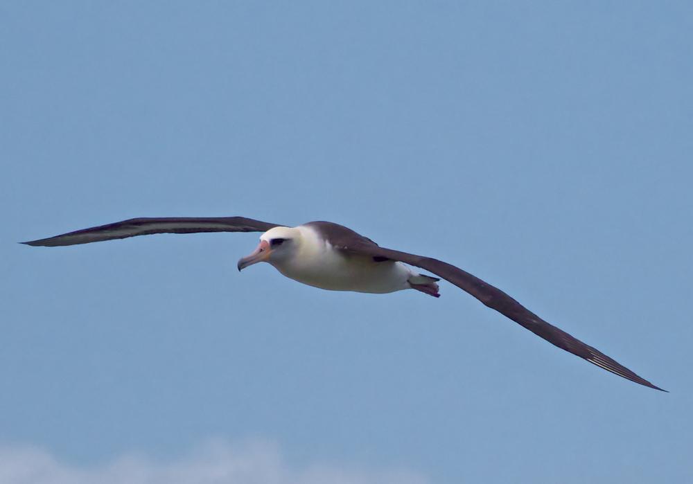 nav_birds_008.jpg