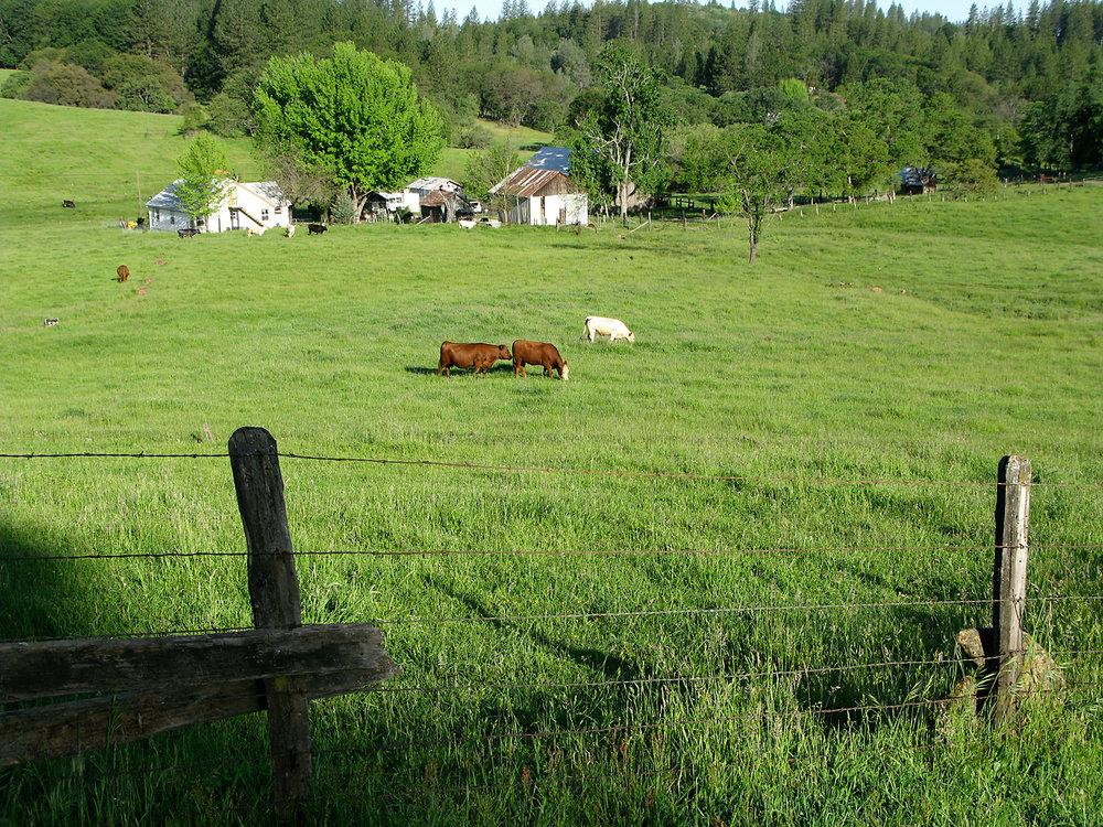 Personeni ranch. Image © 2009–2016 Studio Nuñez