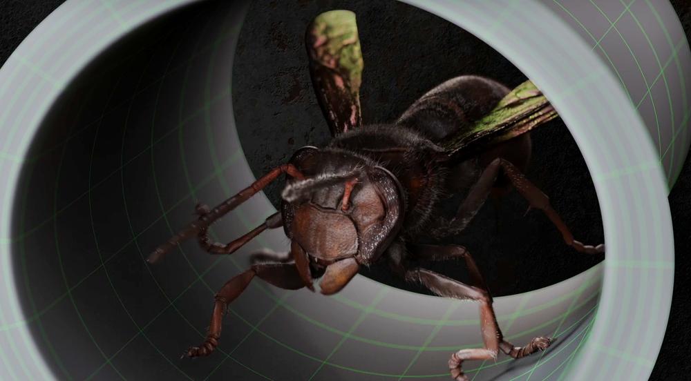 wasp1.png