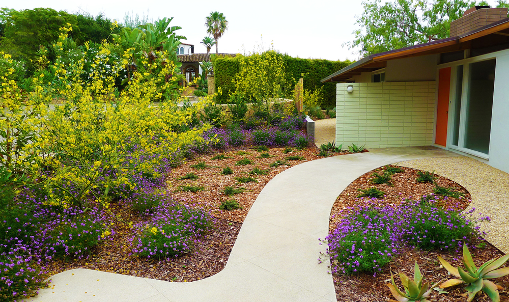 modern landscape with flowering shrubs
