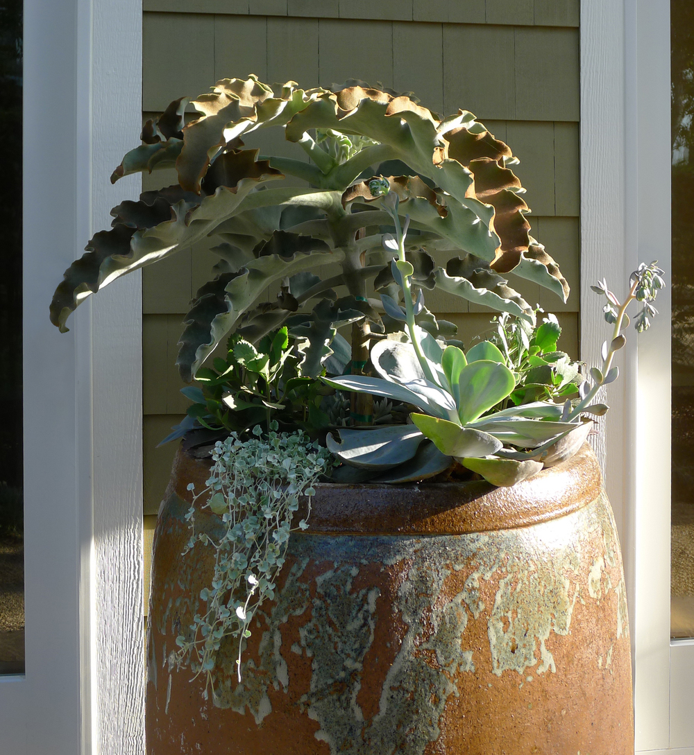 succulents in ceramic pot