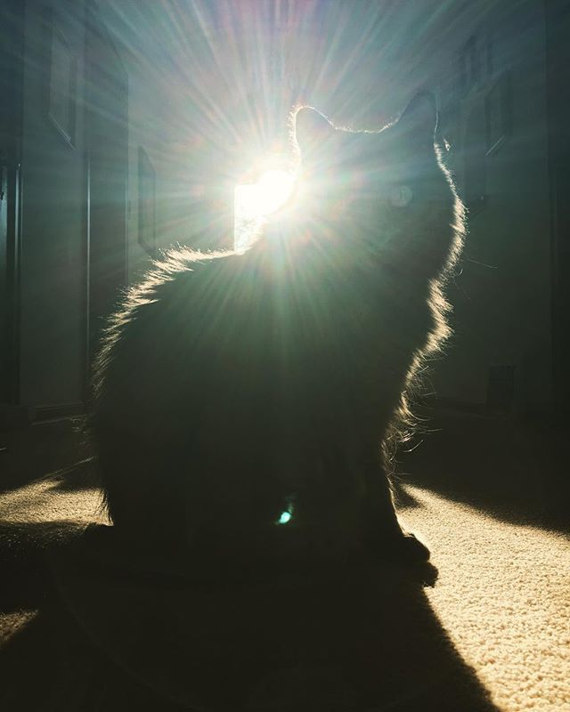 The Sun Cat @christopherpalbickiartist #cats #sunlight #beauty #perfection #bliss #catsofinstagram #ilovecats #kittycat #praise #sunworshipper #sungod #happymonday #gratitude ❤🌎☀😃❤☀