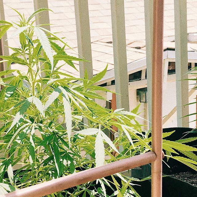- - vegetation - -  agriculture - - mechanics - - #tamu