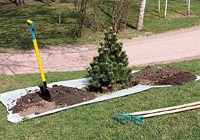 pine_tree_planting_ts-153494763-main.jpg